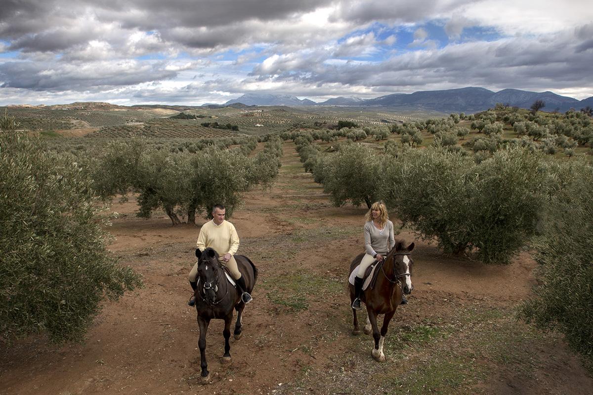 Paseo a caballo por el olivar