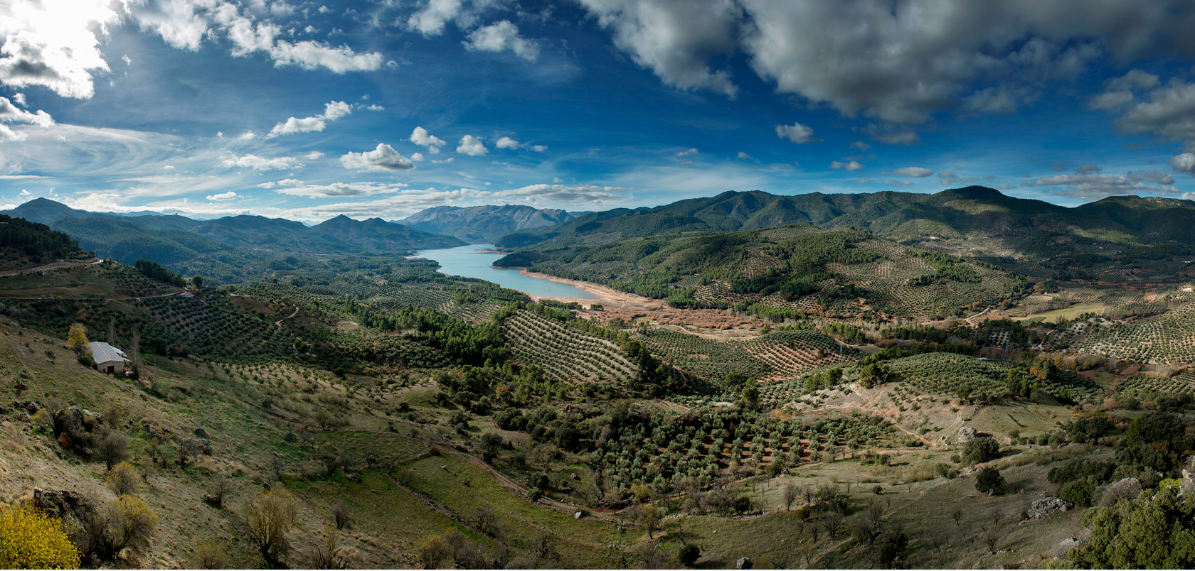 paisajes_olivar_3
